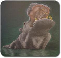 Waldorf ~ 4th grade ~ Human & Animal ~  Hippopotamus ~ chalkboard drawing