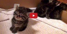 Awwww! Kitten Mutsu Falls Asleep Standing Up