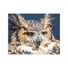 14x11 Great Horned Owl Portrait Canvas Print - animal gift ideas animals and pets diy customize