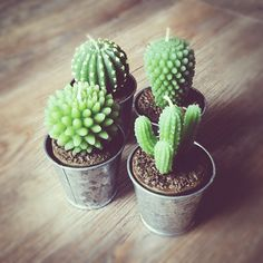 Bougies cactus