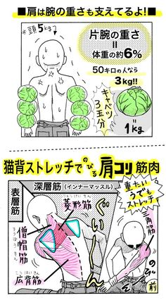 自分の腕の重さ、意識したことありますか?「片腕だけでキャベツ1個分」といわれていますが、実際はそれ以上あるんです!肩には、起きているだけで頭と両腕の重さを支えるための負荷がかかっています。腕が重だ...