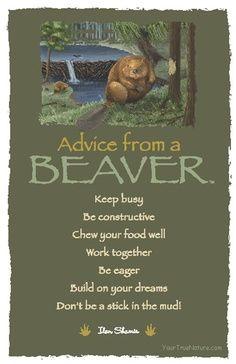 Advice form a beaver