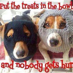 Dog Robbers
