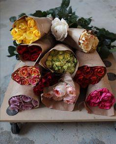 :: rainbow of roses ::