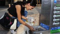 Seapal es el primer organismo que instala Bebederos para mascotas