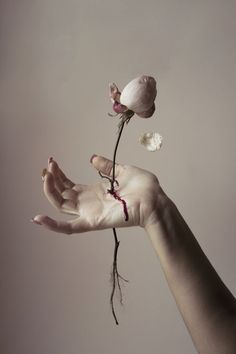~the macabre~ Enchanted Rose, Pics Art, Dark Art, Art Inspo, Art Reference, Art Photography, Photography Aesthetic, Photography Flowers, Photography Lessons