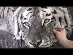 Hyperrealistic Tiger Drawing / 85 Hour Time-lapse - YouTube