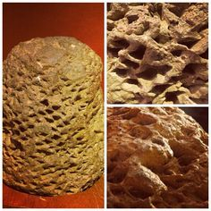 This is a fossil stump of an extinct plant called Cycadeoid.