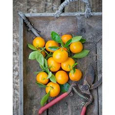 Desserts que faire avec des clementines