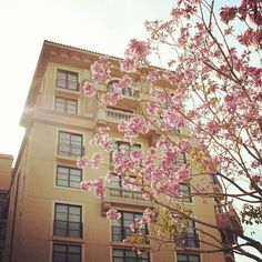 Spring-like blooms outside Montage Beverly Hills.
