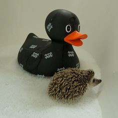 Don't you dare try to limit a rubber duck to the confines of your bath tub. It WILL go rogue.