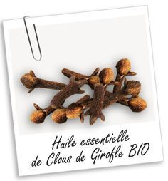 Huile essentielle Girofle Clous BIO Aroma-Zone