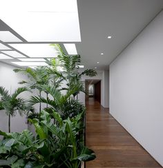 Brazilian architect Isay Weinfeld has mastered the marriage of nature and architecture in the Casa Grecia, where an Eco-system of 1,900 square meters of plants exist within the Sao Paulo home.
