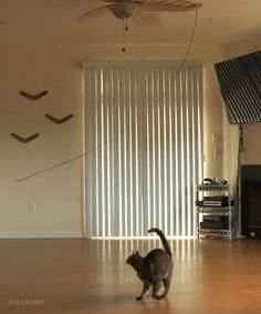 Treadmill For Cats :))) GİF
