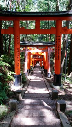 things to do in japan. backpacking east asia travel tips. places to visit japan, in the world bucket list. Cool Places To Visit, Places To Travel, Travel Destinations, Kyoto Travel Guide, Travel Tips, Asia Travel, Japan Travel, Kyoto Itinerary, Nijo Castle