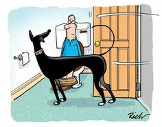 Another Richard Skipworth cartoon that describes life with a Greyhound to perfection! Greyhound Art, Italian Greyhound, Lévriers Whippet, Dog Love, Puppy Love, Lurcher, Grey Hound Dog, Dog Agility, Beautiful Dogs