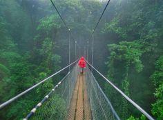 Bosque Nuboso Monteverde, Costa Rica - GETTY IMAGES