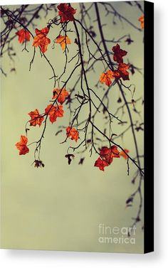 Autumn Canvas Print featuring the photograph Autumn by Diana Kraleva - $79.96