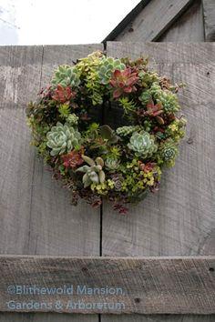 Beautiful Succulent Wreath at Avant Garden