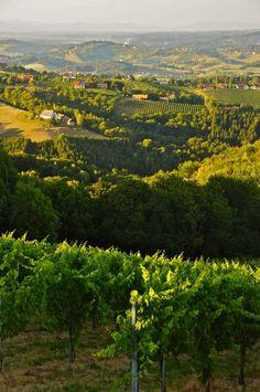 Bild aus dem Jahr 2013 aus der Region Südsteiermark am 1. August, Österreich- Wine Berge.