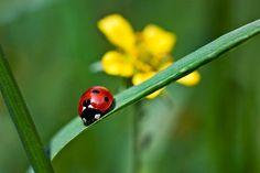"""Ladybird on grass"" by Vicki Field | Redbubble"