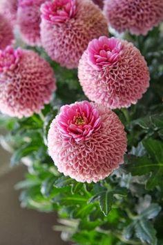 Beautiful cute flower
