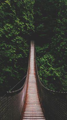 Jungle Bridge iPhone 6 / 6 Plus wallpaper