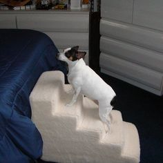 Foam 5 Step Pet Stair >>> Visit the image link more details. (This is an affiliate link and I receive a commission for the sales)