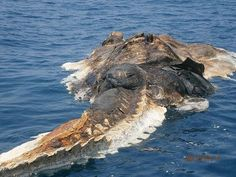 What was that they found in the Persian Gulf?