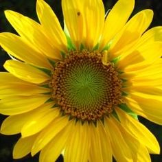 Things that make me smile? Sunflowers. They never cease to delight me. Here's a great squidoo page all abou them http://www.squidoo.com/cool-van-gogh-sunflowers