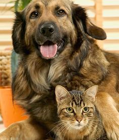 Great safe home remedies for all kinds of pet problems - fleas to chapped paws!