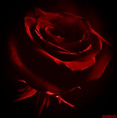 Ꮚelcome to ᙢy dark, elegant Ꮚorld of blood red and golden edits, roses, romance and the dark world. Glitter Pictures, Rose Pictures, Beautiful Pictures, Flowers Gif, Butterfly Flowers, Rose Images, Images Gif, Beau Gif, Every Rose