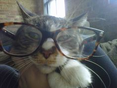 new meme? cats in glasses?!