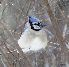 Winter's Blue