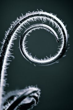 Hairy Spiral by illpadrino.deviantart.com