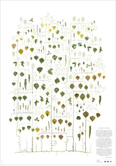 trees, reimagined.