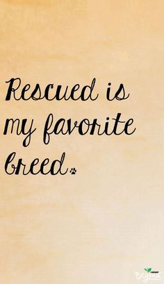 ** Rescued ** is my favorite breed. #dog #breed