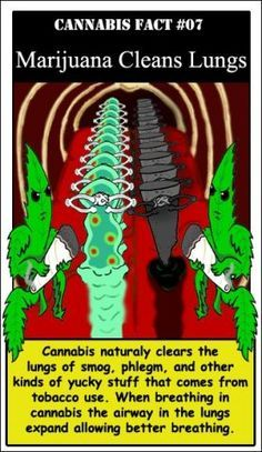 """clanarmstrong: """" Believe it or not, Cannabis is a natural expectorant. Studies, like those produced by UCLA pulmonologist Donald Tashkin have helped to reveal that marijuana smoke is also the best. Weed Facts, Marijuana Facts, Marijuana Funny, Ganja, Clean Lungs, Endocannabinoid System, Puff And Pass, Medical Cannabis, Cannabis Oil"""