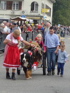 Désalpe de Semsales - En famille Animation, Photos, World, Dogs, Animals, Bernese Mountain Dogs, Germany, Tourism, The World