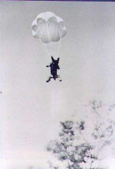 Vintage Action man vintage restored 40th allemand parachutiste Casque
