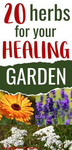 20 Medicinal Herbs to Grow in Your Healing Garden (Make Your Own Herbal Remedies with Plants You Gro - Gardening for SurvivalistsGrow a healing medicinal garden this year! Which herbs are best to grow for your own herbal apothecary? Find out how to s Gardening For Beginners, Gardening Tips, Organic Gardening, Gardening Magazines, Vegetable Gardening, Healing Herbs, Medicinal Plants, Natural Health Remedies, Herbal Remedies
