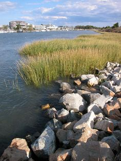 Delaware Estuary, Delaware. You can find here the owner of any Delaware (Wilmington, Newark) cellular / unlisted / landline phone number: http://www.phonesearch.investigations123.com/302/