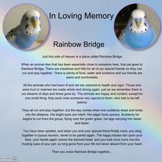 Rainbow Bridge - In Loving Memory...Tiki bird I love you.
