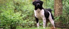 Wetterhound