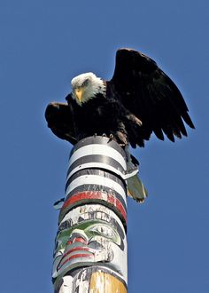 Check out one of the world's highest totem poles in Victoria, B.C. The bald eagle found the best view of the Olympic Peninsula. #exploreVictoria #eagle #baldeagle #totempole | www.tourismvictoria.com