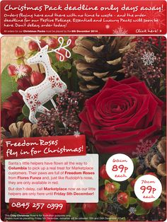 Christmas holidays flower online ad campaign for eFlorist Marketplace