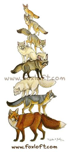 Fox Stack by ~Foxfeather248 on deviantART