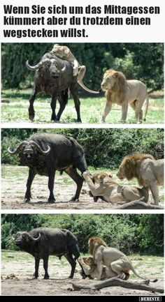 Baby Rhino Thinks He's a Goat! Funny Animal Photos, Funny Animal Memes, Dog Memes, Cute Funny Animals, Funny Dogs, Cute Dogs, Funny Pictures, Funny Memes, Laughing Funny