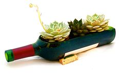 JOJO POST WEEDS: Recycled Wine Bottle Planter Kit - Bottle Garden - DIY - Succulent Bottle Garden, Herb Garden.