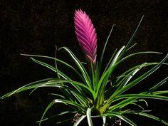 Reptile Safe Plant List with pictures and descriptions Crocodile Skink, Crested Gecko Care, All About Plants, Westies, Indoor Plants, Succulents, Pets, Vivarium, Lawns